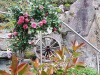 Diestleistung_mediterraner_Garten